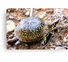 North American Box Turtle #2 Canvas Print