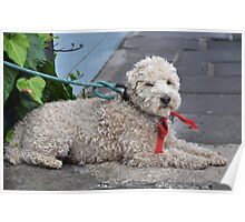 Schnoodle Kaboodle Poster