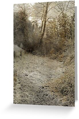 Down the lane by Catherine Hamilton-Veal  ©