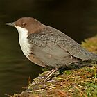 Dipper by Robert Abraham