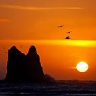 sunset activity at &#x27;the notch&#x27;, la push, washington, usa by dedmanshootn