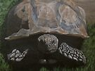 Tortoise by Karen Ilari