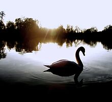 Crystal Waters - swan silhouette by Penny V-P