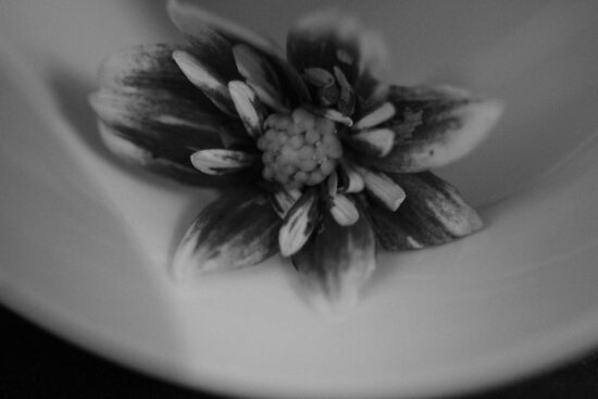 Flower in a cup by KristaRebel