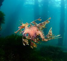 Leafy Sea Dragon (Phycodurus eques) by Sean Elliott