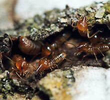 Termites solving their tunnel by Mohd Fadzli Abu Bakar