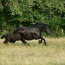 Evening Gallop by Fleur Hallam
