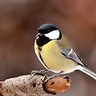 Great Tit by Willem Hoekstra