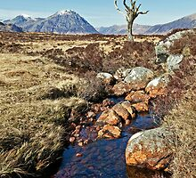 Lone Tree of Rannoch Moor by Stuart Blance