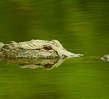 """Reflective Eyes"" - alligator in the Florida Everglades by John Hartung"