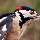 Woodpecker by Ray Clarke