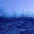 frosty trees by imagegrabber