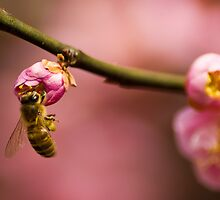 Bee on Pink Tree by crystalseye