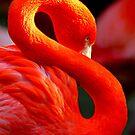 Flamingo by Marianna Tankelevich