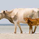 """Sea Cows"" - wild cows on Cedar Island, NC by John Hartung"