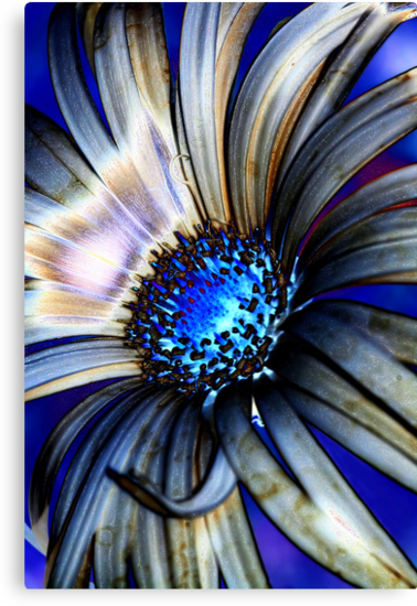 Daisy Abstract IV by Lesley Smitheringale