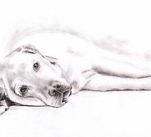 Tired Labrador - Sepia Portrait by Nicole Zeug
