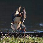Mandarin Landing by relayer51
