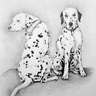 Dalmatian Dogs by Nicole Zeug