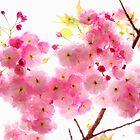 Sakura - Blue Mountain by hinting