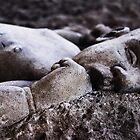 born in stone by tguerrero