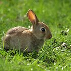 Bunny by George Wheelhouse