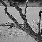 Tree branch at Sleeping Bear Dunes by Randall Nyhof