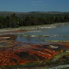 Algae in Midway Geyser Basin by richardely
