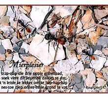Mierplesier by Rina Greeff