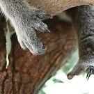 Koala claws by Michelle *