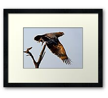 Tawny Eagle In Flight Framed Print