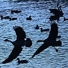Geese on the Fly by Barbara Anderson