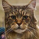 The Maine Kat!  by heatherfriedman