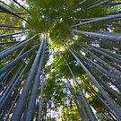 Bamboo Forest Walk by Sam Ryan