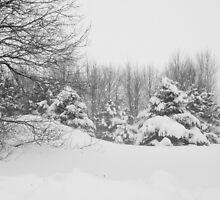 Winter scape by julie101