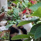 Hiding In Plain Sight by fairielights
