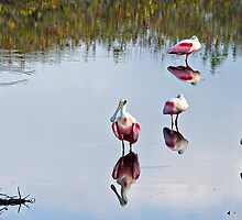 Spoonbills by Michael Wolf