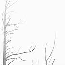 Fading forest by Jocelyn  Parry-Jones