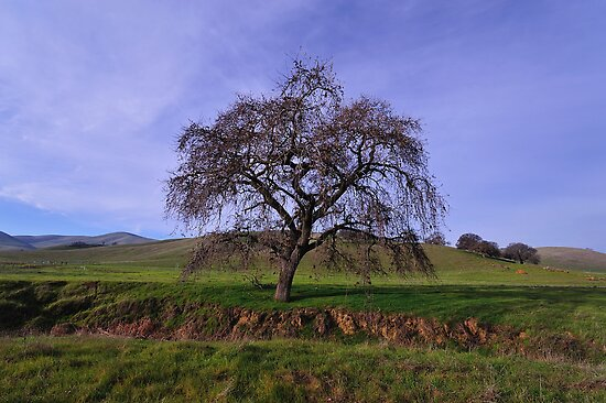 Los Vaqueros Watershed  •  Livermore, California by Richard  Leon