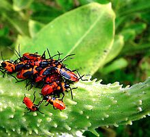 Milkweed Bug Convention by Marcia Rubin