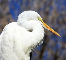 Great Egret Sunning by AuntDot