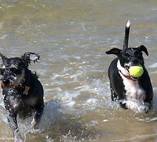 VALLA BEACH DOGS by Ekascam