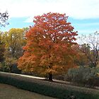 Autumn Ablaze by Carol E. Davis