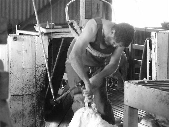 The Shearer by Judy Woodman