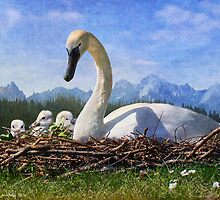 teton summer / nesting swans by R Christopher  Vest