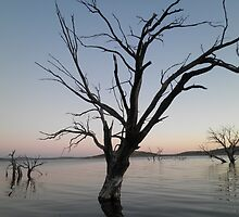 """Ghost tree"" - Lake Eucumbene by eucumbene"