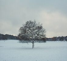 Tree by rualexa
