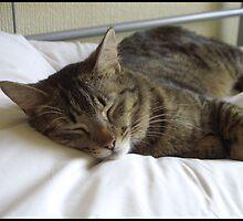 Sleeping stripy cat by Dominic Hallwood