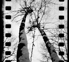 Giraffe Trees at Mount Misery - Lincoln, MA by abraxisdesign