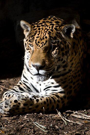 Jaguar in Half-light by Diego  Re